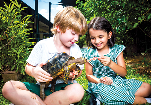 feeding-turtle-alice-smith-school