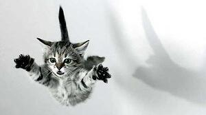 Cat leaping